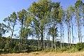 Sjue-medium-eik-Fylkesmannen-i-Vestfold.jpg