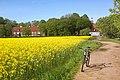 Skåne (Scania) landscape. Rapeseed field near Maria Park outside Helsingborg.jpg