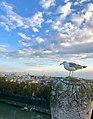 Skyline of Rome from Castel Sant'Angelo (39653878443).jpg