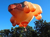 The balloon The Skywhale designed by Patricia Piccinini taking off on its first flight over Canberra
