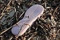 Slippers on the beach of Bantayan 26.jpg