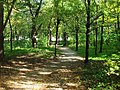 Small path in forest - panoramio.jpg