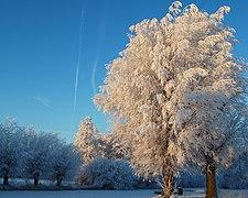 Sneeuw4.jpg