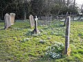 Snowdrops amongst the gravestones - geograph.org.uk - 1187767.jpg