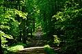 Sommerwald - panoramio (1).jpg