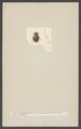 Spercheus - Print - Iconographia Zoologica - Special Collections University of Amsterdam - UBAINV0274 001 02 0014.tif
