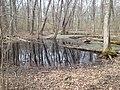 Spotted Turtle spring vernal pool habitat - WRNWR - by CPO (31095901155).jpg