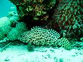 Spotted fish (5501983136).jpg