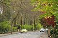 Spring in Epsom (7126221397).jpg