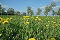 Springtime at Kent's Green - geograph.org.uk - 1274422.jpg