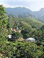 Sri Lanka-Province du Centre-Plantations de thé (8).jpg
