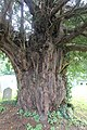 St Briget's Church - Eglwys y Santes Ffraid, Dyserth, Sir Ddinbych, Denbighshire, Wales 36.jpg