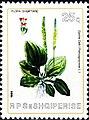 Stamp of Albania - 1984 - Colnect 364194 - Plantain Plantago major.jpeg