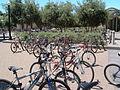 Stanford-bikes.jpg