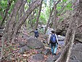 Starr-120425-5173-Syzygium cumini-with Jeremy and Kim-Waikapu Valley-Maui (24513453853).jpg