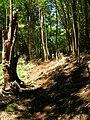 Starr 050911-4406 Nestegis sandwicensis.jpg