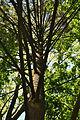 Staryi-park-15056633.jpg
