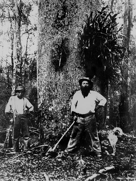 File:StateLibQld 2 116972 William Zerner and his son Louis standing in front of a bottle tree, 1902.jpg