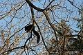Stirling Squirrels 0010 (4099188304).jpg