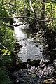Stream, Castlewellan, May 2010 (01).JPG