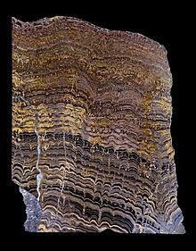 Image result for stromatolite