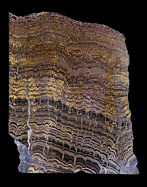 Fossil -  Lower Proterozoic Stromatolites from Bolivia, South America