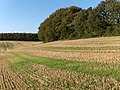 Stubble, Membury - geograph.org.uk - 256784.jpg