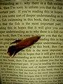 Student Book Art (1472687855).jpg