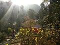 Sunlight in tapoban forest.jpg