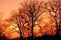 Sunset, Heaton Park, Newcastle upon Tyne - geograph.org.uk - 700874.jpg