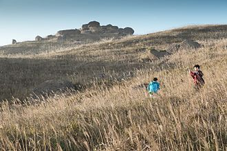 Lantau Island - Miscanthus in Sunset Peak attract many people to come during November to January
