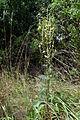 Syenitové skály u Pocoucova 09.jpg