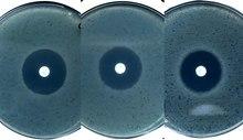 Aegvideo bakterite antibiootikumitundlikkuse testimisest agarplaadil