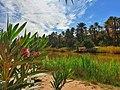 Taghit oasis Béchar Algeria.jpg