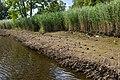 Technisch-biologische Ufersicherung an der Wümme, Versuchsstrecke 2 (50678705991).jpg