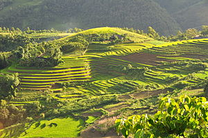 Terrace (agriculture) - Image: Terraced fields Sa Pa Vietnam