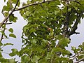 The 2006 apple crop (5393836923).jpg