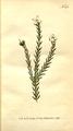 The Botanical Magazine, Plate 292 (Volume 9, 1795).png