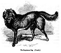 The Esquimaux Dog.jpg