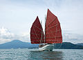 The Naga Pelangi sailing butterfly.JPG