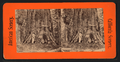 The Old Veteran, California, from Robert N. Dennis collection of stereoscopic views.png