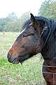 The Photogenic Horse --) (1568306916).jpg