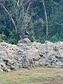 The Secret Beauty of Nature in Srilankaevsgegdveveueb.jpg
