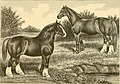 The breeds of live stock, and the principles of heredity (1887) (14777994031).jpg