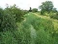 The overgrown disused canal in Westport - geograph.org.uk - 476171.jpg