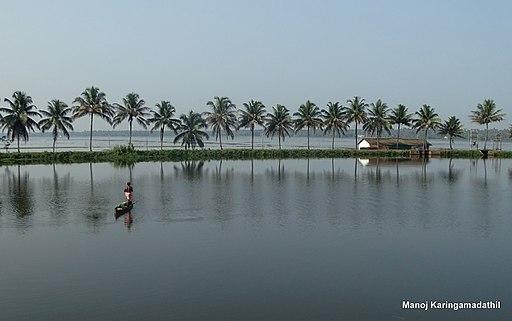 Thrissur Kole Wetlands May 2015 DSC04374