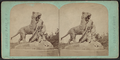 Tiger and cubs, from Robert N. Dennis collection of stereoscopic views.png