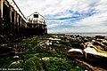 To The Sea (165654975).jpeg