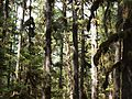 Tongass National Forest 533.jpg