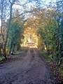 Track from Coneygree Wood - geograph.org.uk - 1598999.jpg